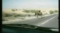 Koń przebiega po samochodzie!